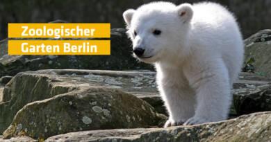DAS Zeitung Berlin Hayvanat Bahçesi